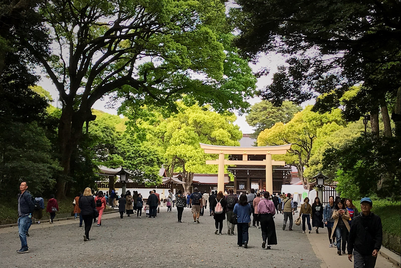 Meiji-Shrine003